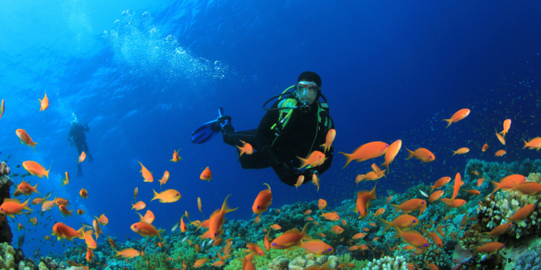 Snorkelling & scuba diving - the difference between the two