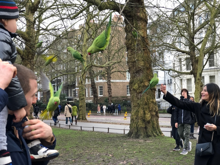parakeets-st-james-park-london-animals-birds-tourists