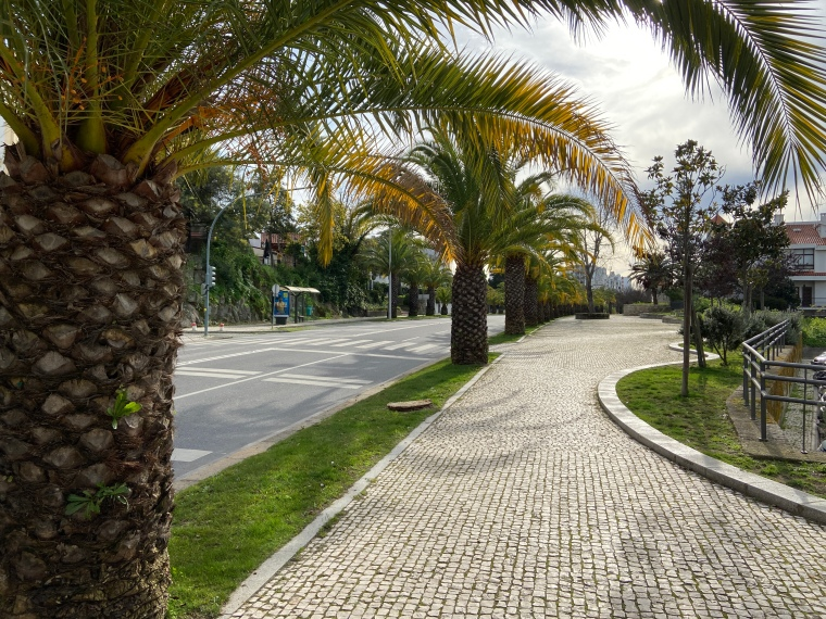 Palm tree lined street (Ave. 1 de Maio) Castelo Branco Instagrammable locations