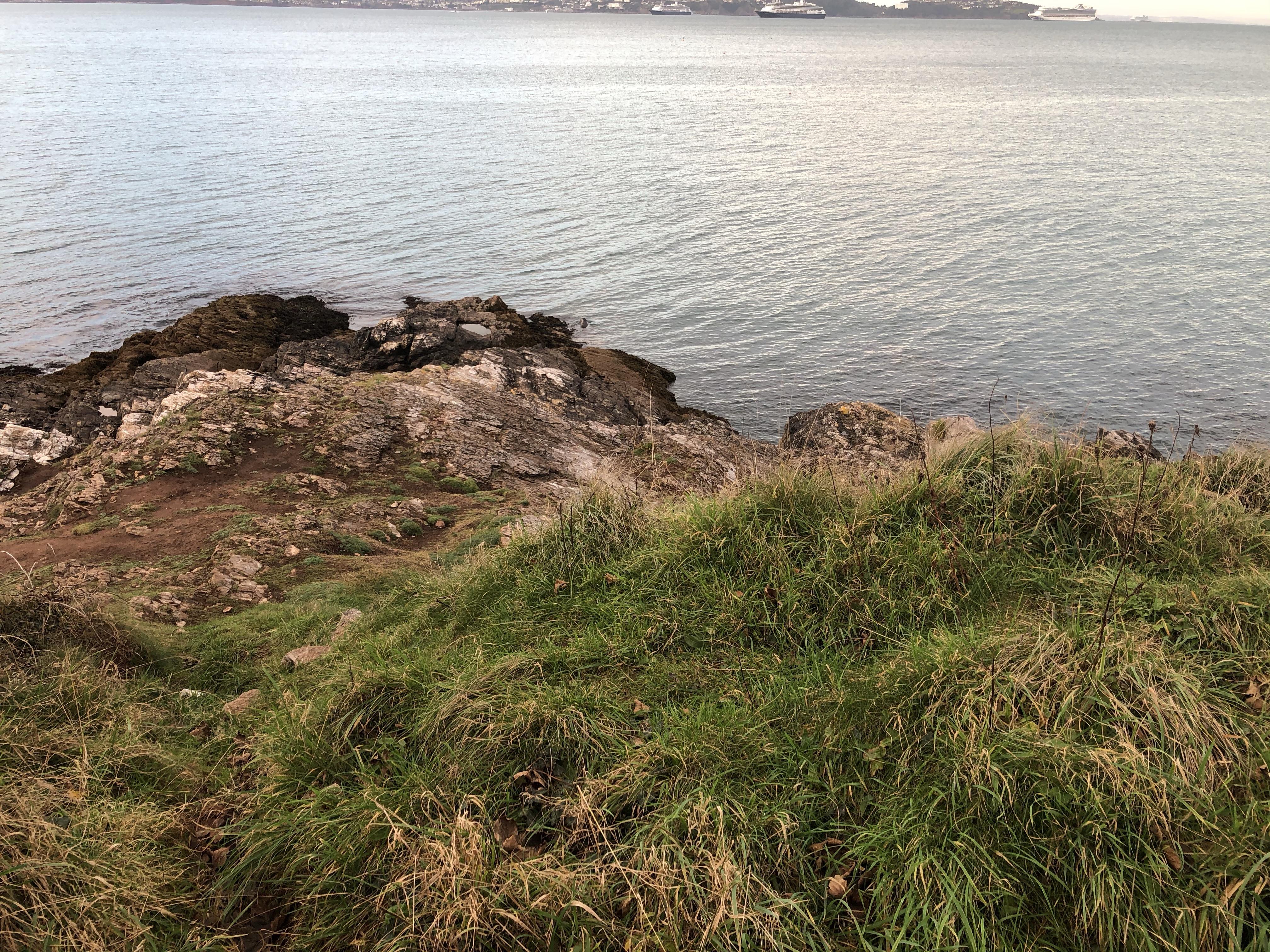 Seal in the water near Battery Gardens in Devon