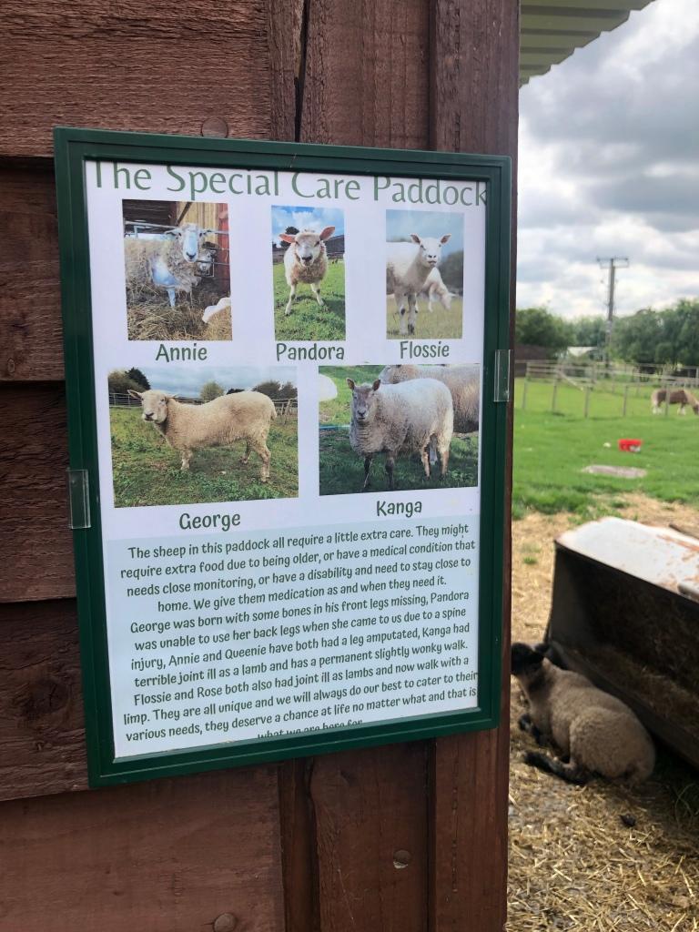 the farm animal sanctuary evesham