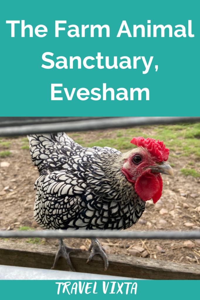 The Farm Animal Sanctuary, Evesham